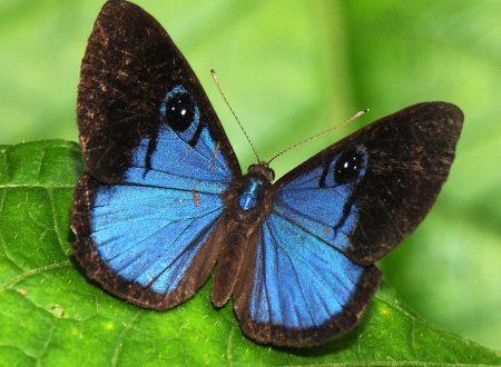 Il messaggio della farfalla