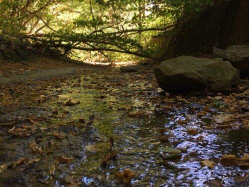 La foresta delle fronde stregate