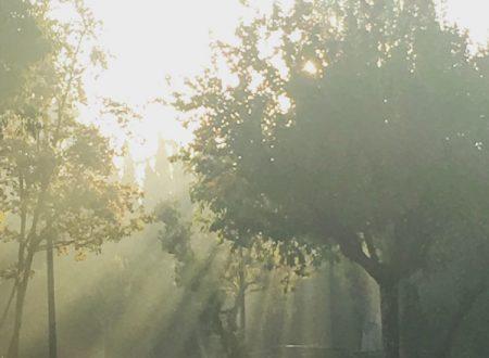 Pioggia di sole